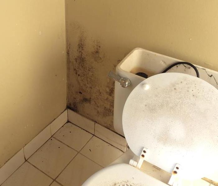 Mold behind toilet
