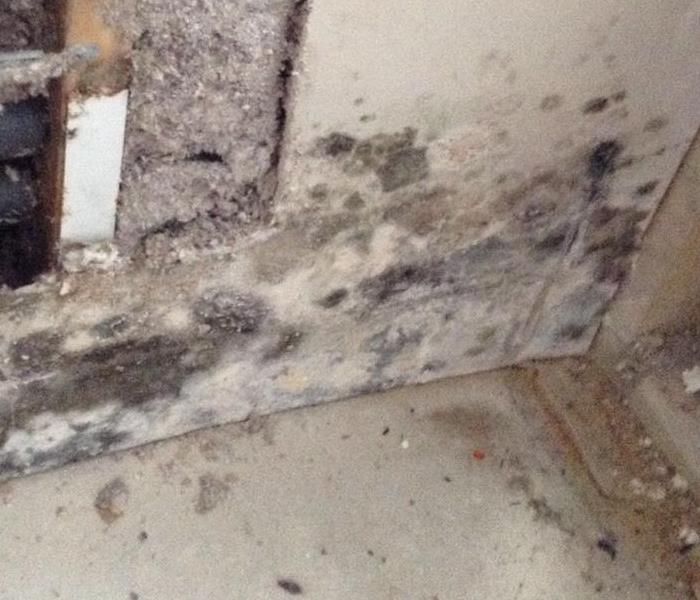 Commercial Inspecting A Commercial Facility For Mold